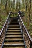 Лестница в лесе Стоковое фото RF