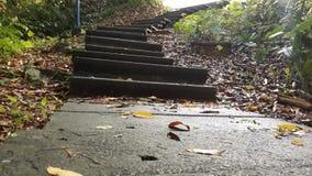 Лестница которая водит к этой природы влияниям будущего и стоковые изображения rf
