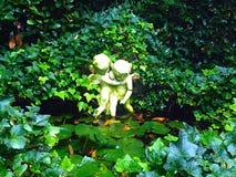 Лестница к вечнозелёному растению Стоковые Фотографии RF