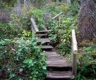 Лестница к деревьям стоковое изображение rf