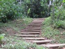 Лестница к лесу - Paraty Стоковые Изображения RF