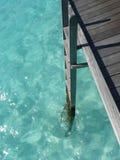 Лестница к морю Мальдивов Стоковая Фотография RF