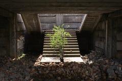 Лестница к раю Стоковое Изображение