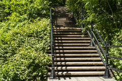 Лестница к древесинам Стоковые Изображения RF