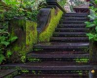 Лестница мха стоковые фотографии rf