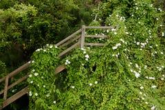 Лестница на холме около парка Windjammer в гавани дуба Стоковые Изображения RF