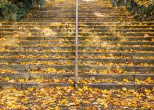 Лестница осени Стоковые Фото