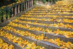 Лестница осени Стоковое Фото