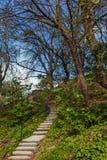 Лестница среди деревьев Стоковые Изображения