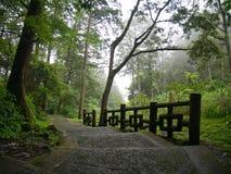 Лестницы водя вниз с холма в зеленом туманном лесе стоковая фотография