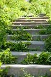 Лестницы в лесе Стоковое Фото