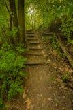 Лестницы в лесе, славных цветах, деревьях и траве в осени, волшебных мягких цветах Стоковые Изображения