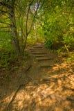Лестницы в лесе, славных цветах, деревьях и траве в осени, волшебных мягких цветах Стоковая Фотография RF