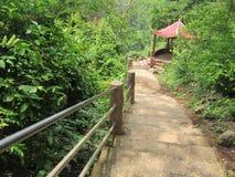 Лестницы в природе Стоковые Фото