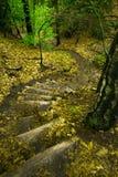 Лестницы в пуще Стоковые Изображения RF