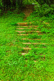 Лестницы в древесинах Стоковое Изображение RF