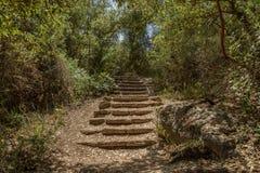 Лестницы в древесинах Стоковое Изображение
