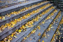 Лестницы гранита каменные с листьями Стоковое Изображение RF