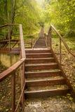 Лестницы или шаги водя через лес стоковое изображение rf