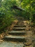 Лестницы идут вверх в джунгли Стоковое Фото