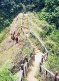 Лестницы идя гористый в лесе Стоковые Фотографии RF