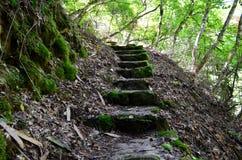Лестницы к водопаду Стоковое Фото