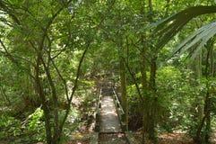 Лестницы к естественному Стоковые Изображения