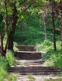 Лестницы парка Стоковые Фото