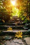 Лестницы солнечности каменные Стоковые Изображения