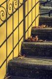 Лестницы с листьями Стоковые Фото