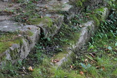 Лестницы с травой стоковые изображения