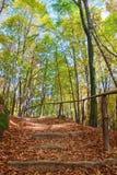лестницы холма деревянные Стоковая Фотография