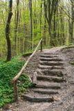 лестницы холма деревянные Стоковые Фото