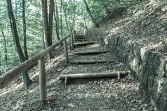 Лестницы Forrest Стоковое Изображение