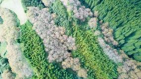 Лес - Азорские островы, Португалия Стоковые Изображения