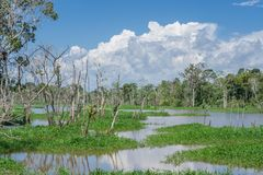 Лес Амазонки и черное река Стоковые Фотографии RF