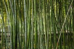 Лес бамбука виска Dinghui горы Zhenjiang Jiao Стоковая Фотография