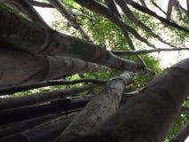 Лес бамбука стоковые изображения rf