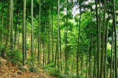 Лес бамбука Anji Китая стоковое фото