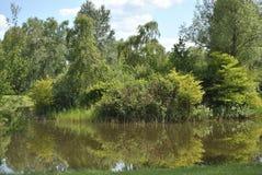 Лес берега озера Стоковое Изображение RF