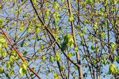 Лес березы в солнечном свете Стоковые Изображения RF