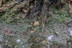 Лес болота торфа Стоковое Изображение RF