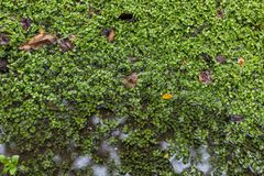 Лес болота торфа Стоковые Изображения RF