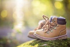 Лес ботинка младенца Стоковое фото RF