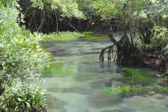 Лес болота торфа Стоковое Изображение