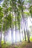 Лес бука в Венгрии Стоковые Изображения RF