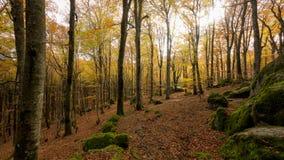 Лес бука в погоде осени, обнаженных деревьях и кровати сухих листьев на пути на том основании Теплые цвета осени в стоковая фотография rf