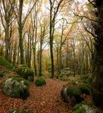 Лес бука в погоде осени, обнаженных деревьях и кровати сухих листьев на пути на том основании Теплые цвета осени в стоковые изображения rf