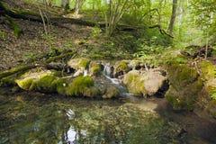 Лес бука, зеленый цвет леса 15 Стоковые Фотографии RF