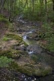 Лес бука, зеленый цвет леса 22 Стоковое Изображение RF